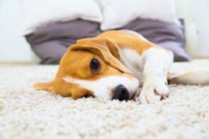 Kuhn Flooring and Your Boca Raton Carpet Installation
