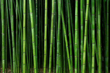 Don't Be BAMBOOzooled By Others: Trust Kuhn Flooring for All of Your Bamboo Facts