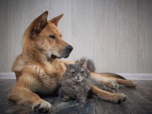 Hardwood Flooring & Your Pets